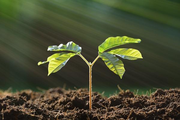 edburst-sprout-1.jpg